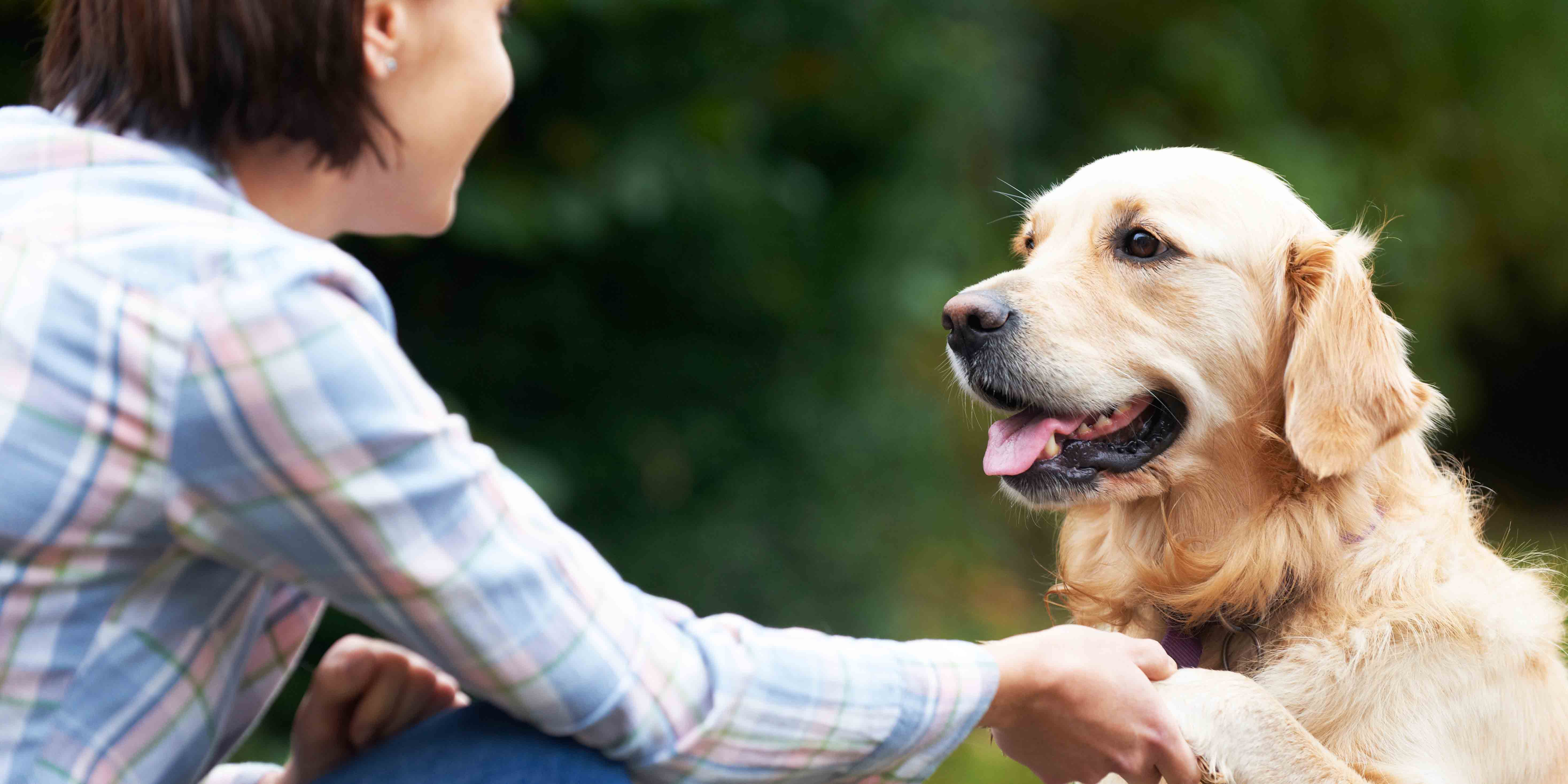 pet sitting by West Childcare Connection, Vancouver